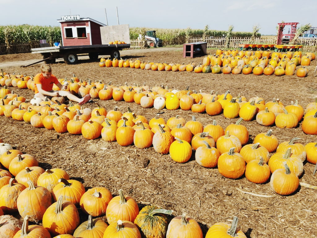 fall pumpkins at schusters farm